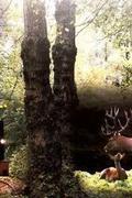 Elrejtett vizivilág - A Gemenci erdő