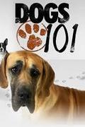 101 Nagykutya - Kutyafajták