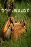 Történet a mangalicáról