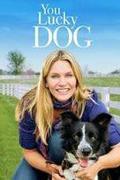 Kutyaszerencse /You Lucky Dog/ 2010.