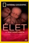 Élet az anyaméhben (In the Womb)